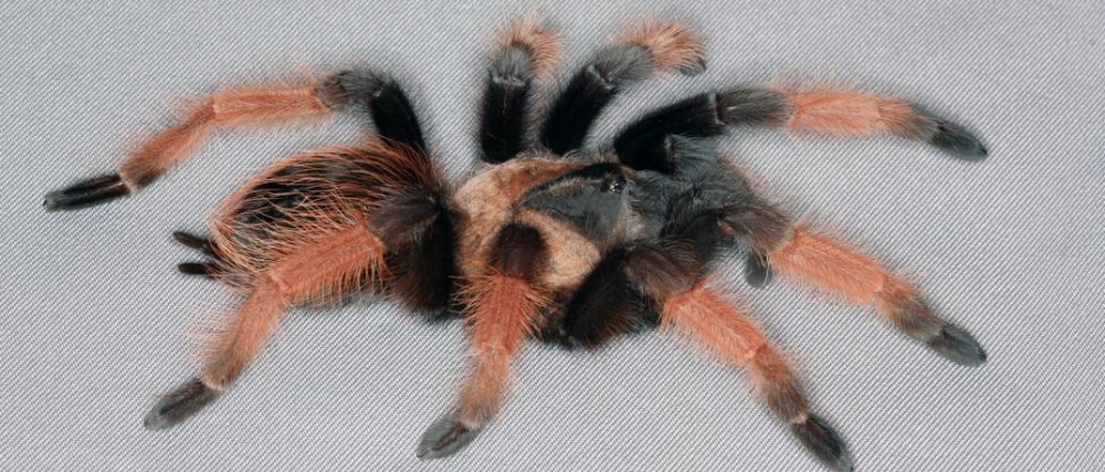 35th British Tarantula Society Exhibition  Warwickshire Exhibition Centre